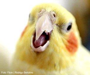 aves-que-arrancam-penas_interna