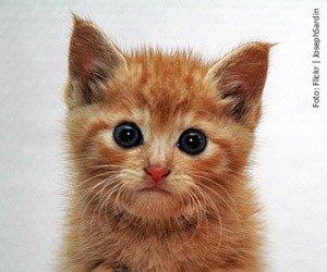 comportamento-gatos_interna