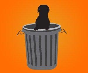 caes-reviram-lixo_interna
