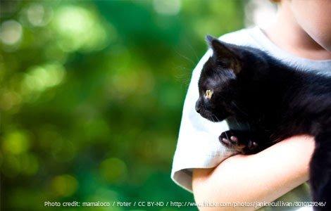 crianca-gato