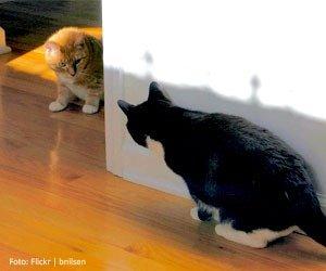 gatos-brigam_interna