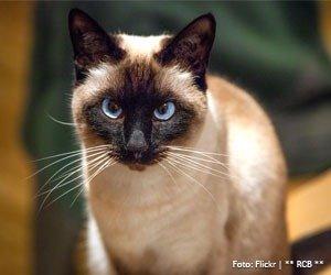 passeio-gato_interna