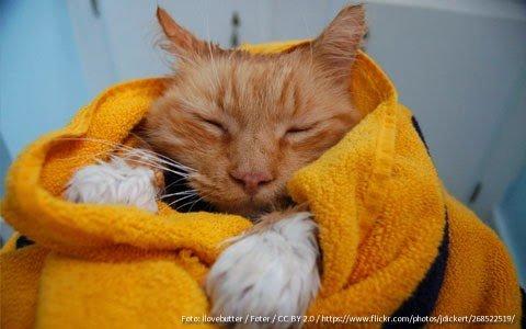banho-no-gato