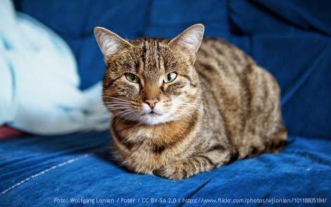 gato-arranha-sofa
