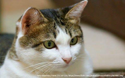 gato-mudanca