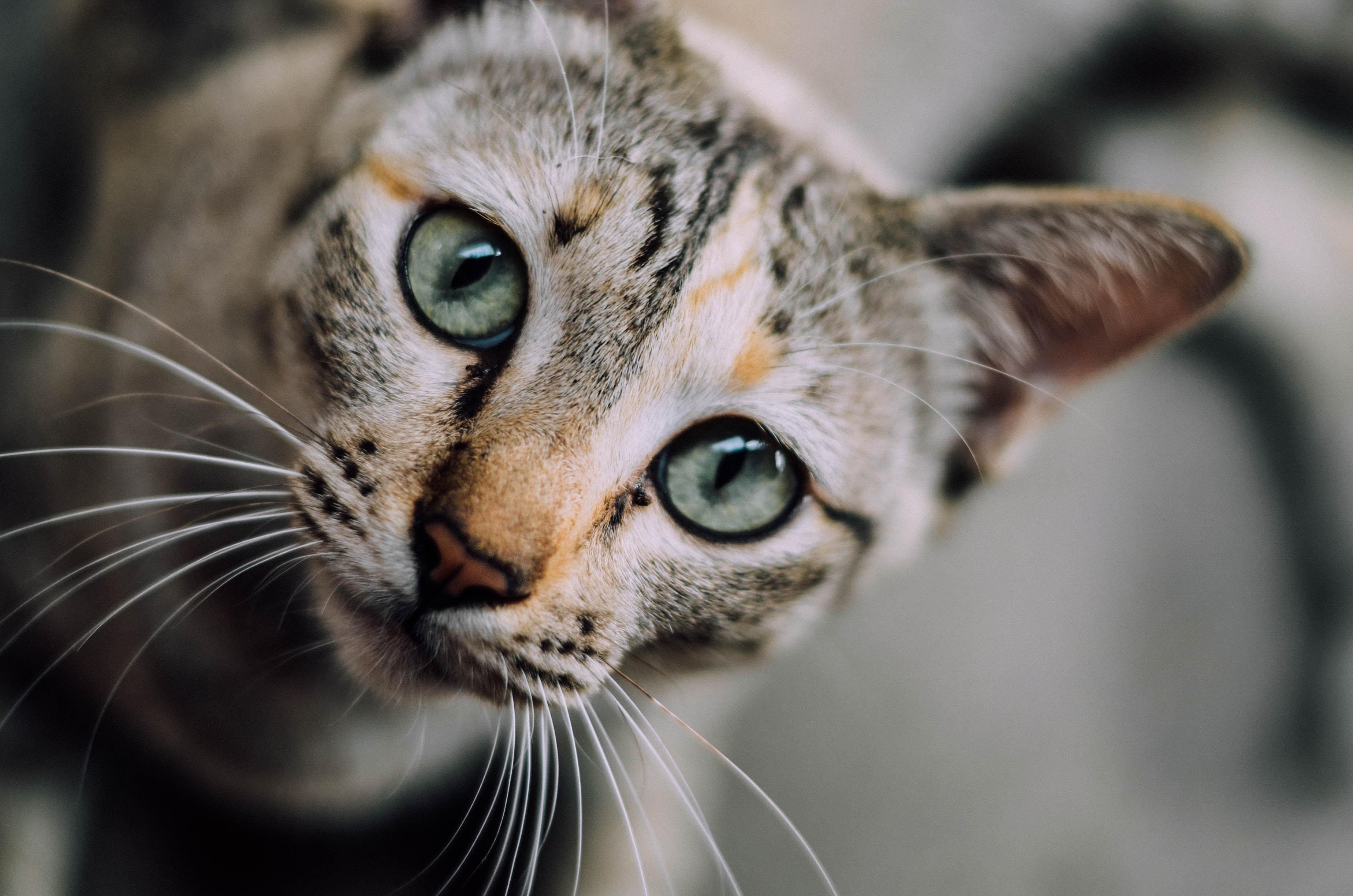 Gatos-são-inteligentes