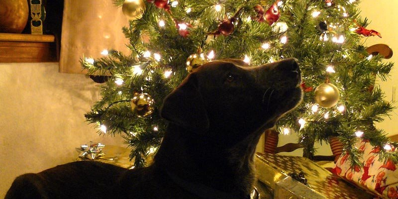 cachorro-arvore-natal