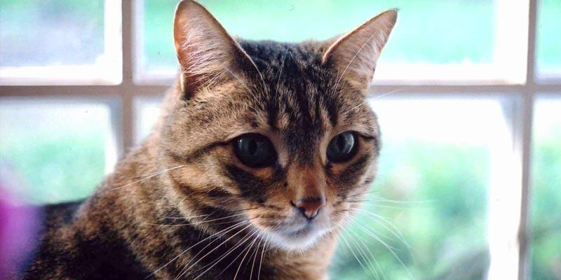 gato-caixa-de-areia
