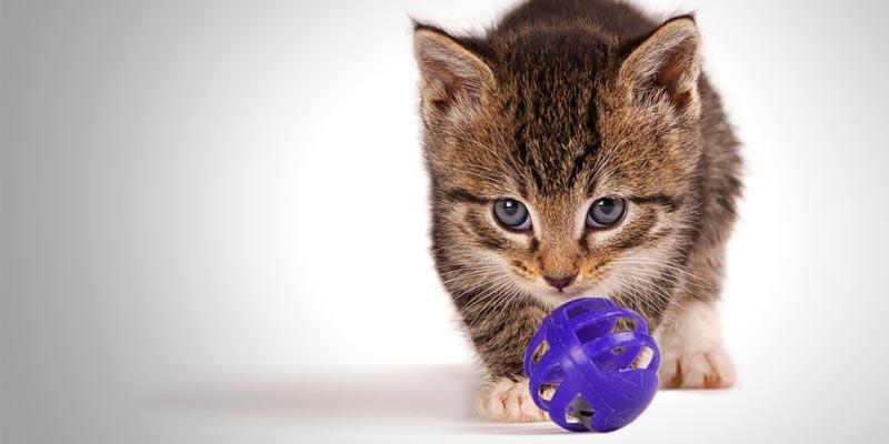 gato-bolinha