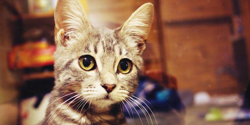 introduzir-novo-gato