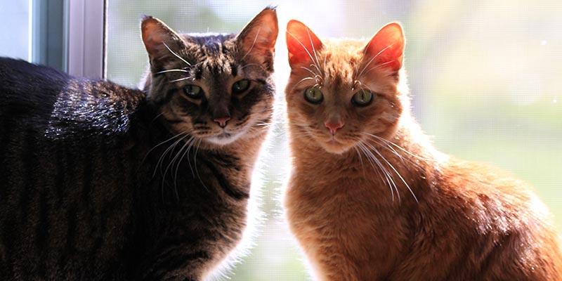 dicas_interna-brigas-entre-gatos