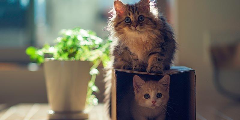 dicas_interna-enriquecimento-gatos