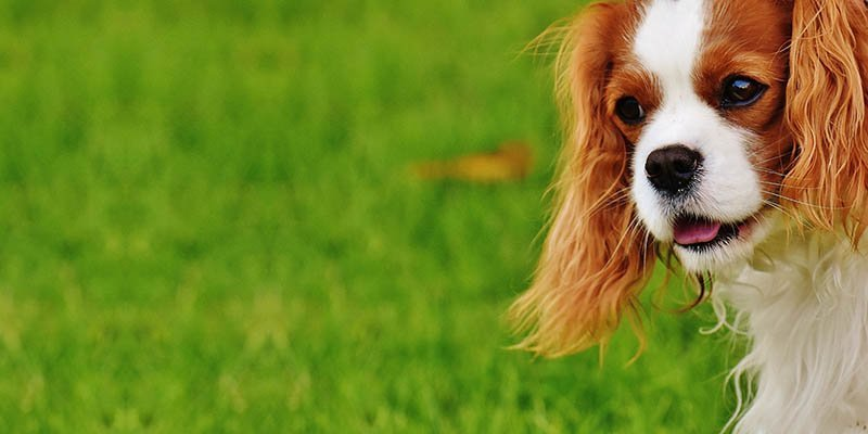 5 coisas que você precisa saber sobre cachorros filhotes