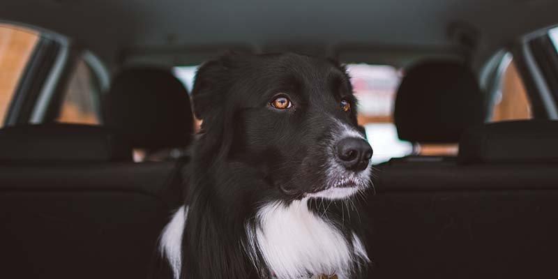 Dicas para viajar com cachorro nas férias / Photo by Tadeusz Lakota on Unsplash
