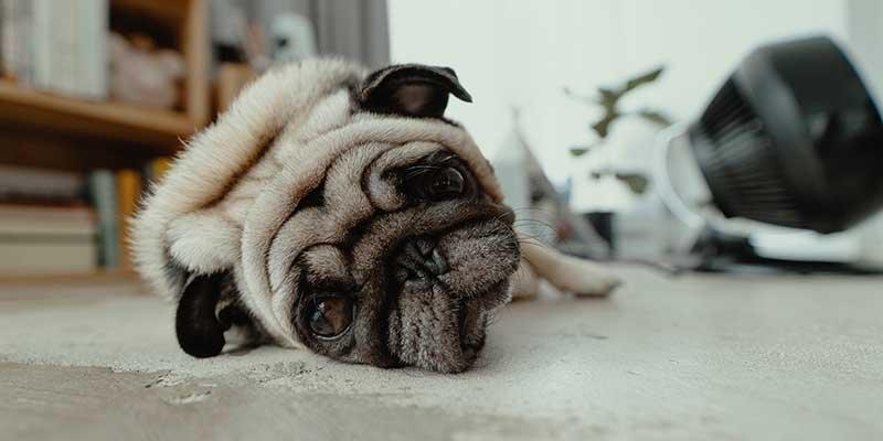Seu cachorro faz xixi no lugar errado? Veja como resolver / Photo by JC Gellidon on Unsplash
