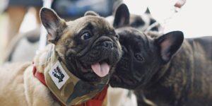 Como adaptar um novo cachorro à família?