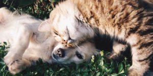 Saiba como fazer a sociabilização de cães e gatos