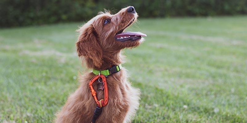 Quanto custa adestrar um cachorro?