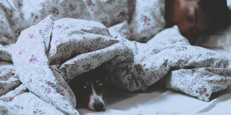 Dormir com o pet faz mal?
