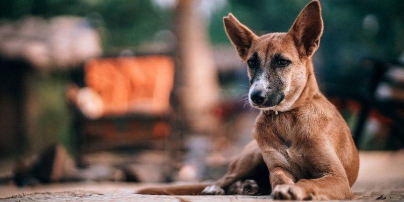 Como agir caso encontre um cachorro abandonado