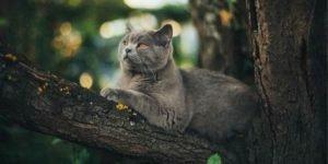 Gatos que saem sozinhos: como agir?