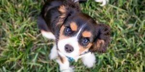 Como adestrar um cachorro filhote?
