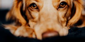 Coronavírus (Covid-19) e pets: o que você precisa saber